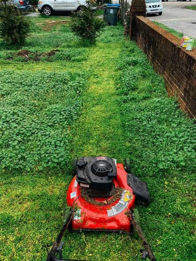Články o záhrade a záhrade