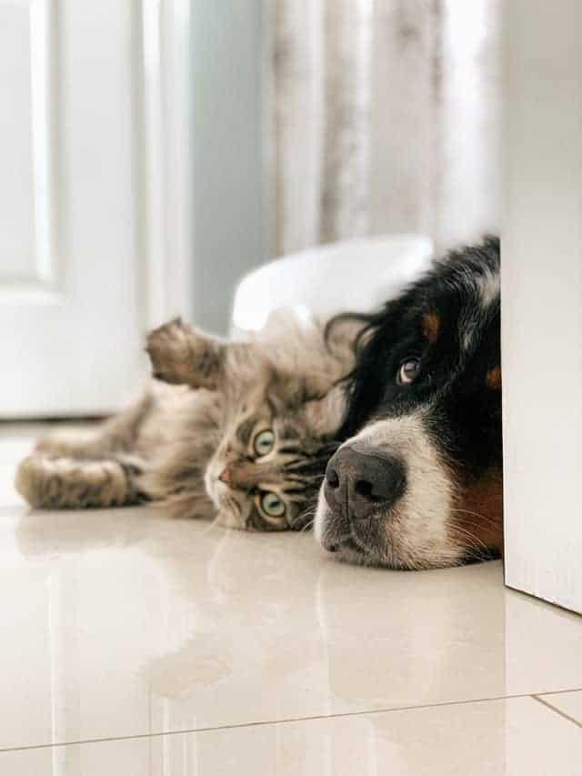 Pet Care Articles